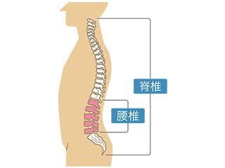 腰椎 脊椎